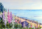 Foxgloves By The Sea, Dorset UK